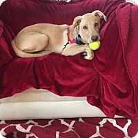 Adopt A Pet :: Parker - Mooresville, NC