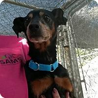 Adopt A Pet :: Albert - Hanna City, IL