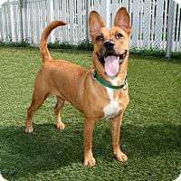Adopt A Pet :: Tuffie - Bradenton, FL