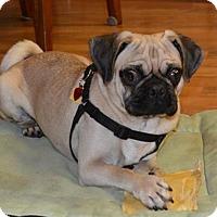 Adopt A Pet :: Tigger - Topeka, KS