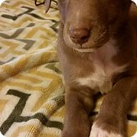 Adopt A Pet :: Spike - Westport, CT