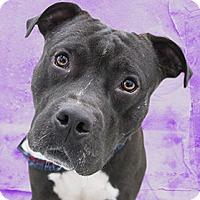 Adopt A Pet :: Buck - Cincinnati, OH