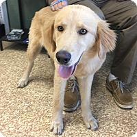 Adopt A Pet :: Bob - Santa Ana, CA