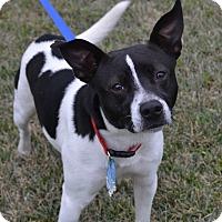 Adopt A Pet :: Spots - Beaumont, TX