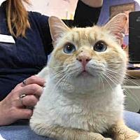 Adopt A Pet :: ZUKO - Canfield, OH