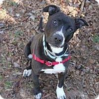 Adopt A Pet :: Mikey - Mebane, NC