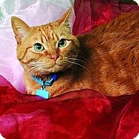 Adopt A Pet :: CiCi - Chesapeake, VA