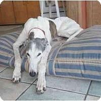 Adopt A Pet :: Blaze (Reko Millennium) - Chagrin Falls, OH