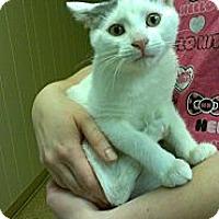 Adopt A Pet :: Chris Hemsworth - Richboro, PA
