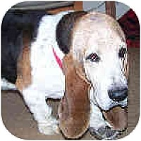 Adopt A Pet :: Wilkinson - Phoenix, AZ