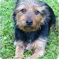 Adopt A Pet :: Skip - Mocksville, NC
