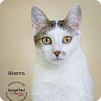 Adopt A Pet :: Sierra - Phoenix, AZ