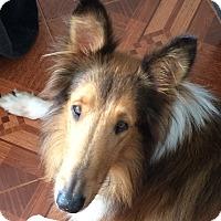 Adopt A Pet :: Lad - Orlando, FL