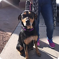 Adopt A Pet :: Savannah - Gilbert, AZ