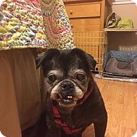 Adopt A Pet :: 2015-2030 Chang - Summerfield, NC
