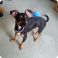 Adopt A Pet :: Harrison - Adoption Pending - West Allis, WI