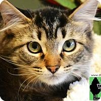 Adopt A Pet :: Ms. Peacock - Little Rock, AR