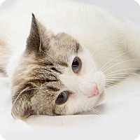 Adopt A Pet :: Lucky - Schererville, IN