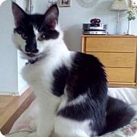 Adopt A Pet :: Sparkles - Kirkwood, DE