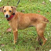 Adopt A Pet :: Minnie - Normandy, TN