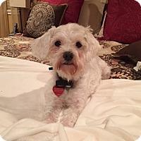 Adopt A Pet :: Margo - Fremont, CA