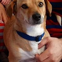 Adopt A Pet :: Steve - Fresno, CA