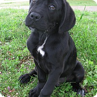 Adopt A Pet :: Titan - Bedminster, NJ