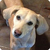 Adopt A Pet :: Zelda - Trenton, NJ