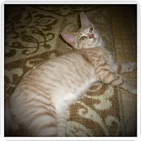 Adopt A Pet :: AUSTIN - Medford, WI
