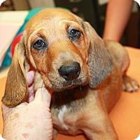 Adopt A Pet :: Henley - Sparta, NJ