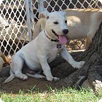 Adopt A Pet :: BROCK - Hartford, CT
