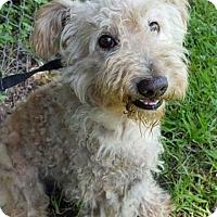 Adopt A Pet :: Burton - Dickinson, TX