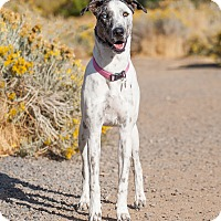 Adopt A Pet :: Jazzy - Washoe Valley, NV