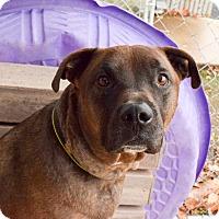 Adopt A Pet :: Rebel - Meridian, ID