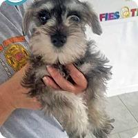 Adopt A Pet :: Blue - Kimberton, PA