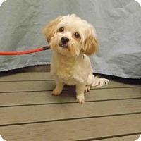 Adopt A Pet :: *WALTON - Upper Marlboro, MD