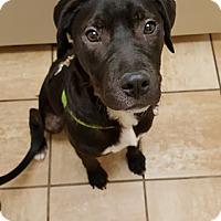 Adopt A Pet :: Ford - Midlothian, VA