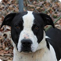 Adopt A Pet :: Patsy - Hagerstown, MD