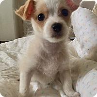 Adopt A Pet :: Bagel - Santa Ana, CA