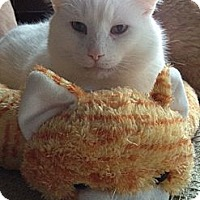 Adopt A Pet :: Lupin - Byron Center, MI