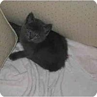 Adopt A Pet :: Tilly - Davis, CA
