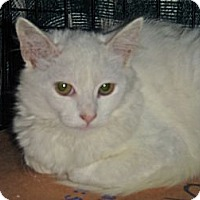 Adopt A Pet :: Linna - Escondido, CA