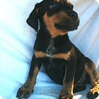 Adopt A Pet :: Junior - Russellville, AR