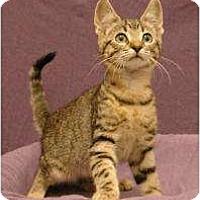 Adopt A Pet :: Scott - Sacramento, CA