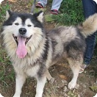 Adopt A Pet :: Beast from Korea - Augusta County, VA