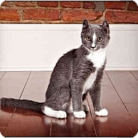 Adopt A Pet :: Juniper - Owensboro, KY