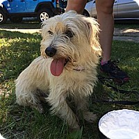 Adopt A Pet :: Freddie  9 mos. - Marlton, NJ