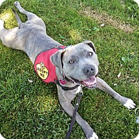 Adopt A Pet :: Emma, loves kids! - Sacramento, CA