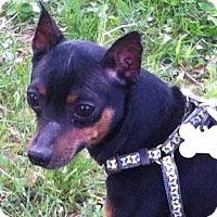 Adopt A Pet :: Apollo - Bridgewater, NJ