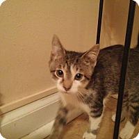 Adopt A Pet :: Jordan - Mount Laurel, NJ